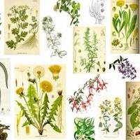como-curar-herpesgenitales-con-plantas-medicinales-caseros